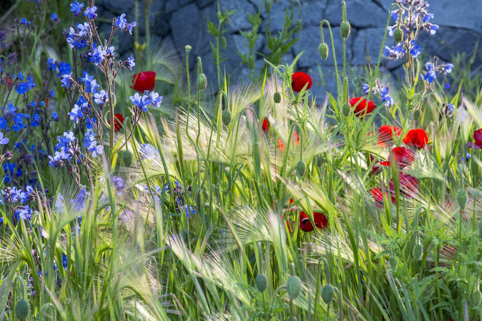 GardenDesignPlanting2