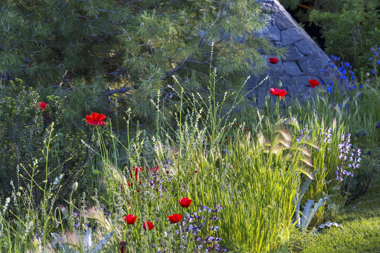 Hugo Bugg Chelsea Flower Show 2016 8