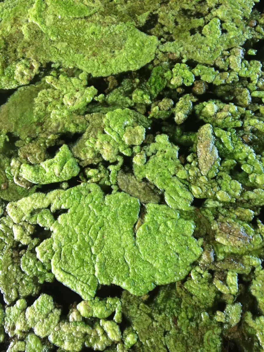 Algal Bloom