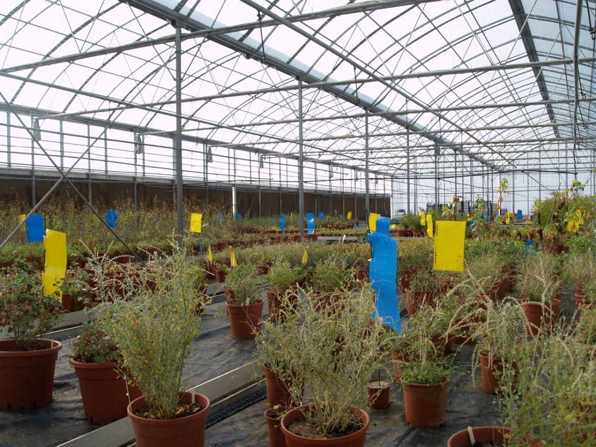 Oman Botanic Garden