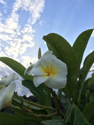 Spiralling flower