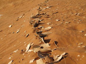 Sun baked soil
