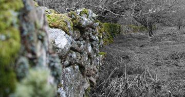 Dry stone wall, Dartmoor