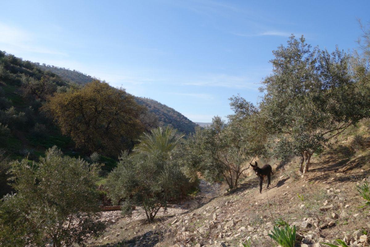 Jordanian Wadi